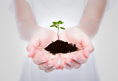 Hand holding green small plant Royalty Free Stock Photography