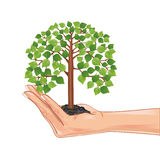 Hand holding a green tree, isolated on white Stock Photos