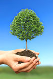 Hand holding green tree in nature Royalty Free Stock Photos