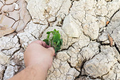 Hand holding green tree sprout on cracked ground Stock Image