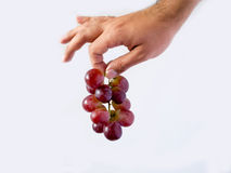 A hand holding a group of grapes. With a white background Royalty Free Stock Images