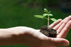 Hand holding a growing young plant, green background, new life, gardening, environment, ecology concep Stock Image