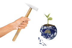 Hand holding hammer. With new born tree on earth  on white background.Elements of this image furnished by NASA Stock Image
