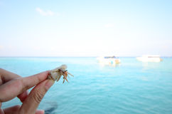 Hand holding hermit crab Stock Images