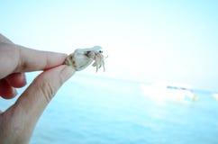 Hand holding hermit crab Stock Photo
