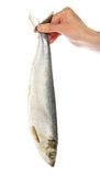 The hand holding a herring for tail Royalty Free Stock Images