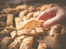 Hand holding homemade almond biscotti. Photo shows a hand holding a crunchy homemade almond biscotti in front of hundreds of biscotti Royalty Free Stock Photo