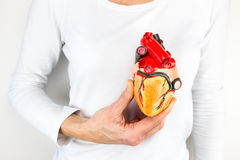 Hand holding human heart model in front of chest royalty free stock photo