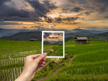 Hand holding Instant photo and view rice sunset Royalty Free Stock Image