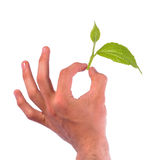 Hand holding leaf Royalty Free Stock Photos