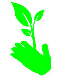 Hand holding leaf Royalty Free Stock Image