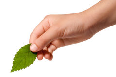 Hand holding a leaf royalty free stock images