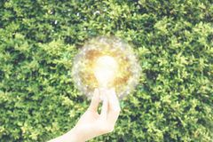Hand holding the light bulb against the green leave wall wiht fake sunlight on wire globe frame in ecology environment saving conc stock photos