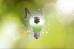 Hand holding light bulb against tree with butterfly. Royalty Free Stock Photos
