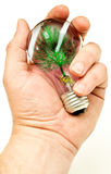 Hand Holding Light Bulb with Artificial Tree Stock Photo