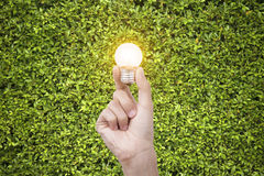 Hand holding light bulb on green nature background. Stock Image