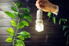Hand holding light bulb next to the green tree Stock Photo