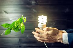 Hand holding light bulb next to the green tree Royalty Free Stock Photo