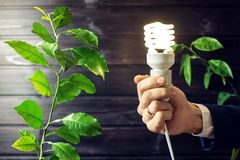 Hand holding light bulb next to the green tree Stock Photos