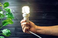 Hand holding light bulb next to the green tree Royalty Free Stock Photos
