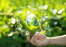 Free Hand Holding Light Bulb On Green Leaves With Energy Source Icons Stock Photo - 124448930