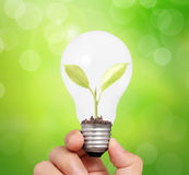 Hand holding light bulb with young green plant Royalty Free Stock Photo
