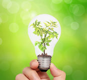 Hand holding light bulb with young green plant Royalty Free Stock Photography