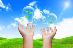 Hand holding lightbulb. Eco concept Stock Images