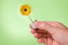 Hand holding lightbulb with  flower inside Stock Images