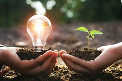Hand holding lightbulb with small tree. concept energy. Power in nature stock photo