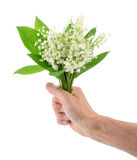 Hand holding  lily of the valley  on white Royalty Free Stock Photo