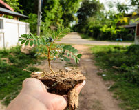 Hand holding little tree. One hand holding little tree,concept develop green earth Stock Photography
