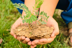Hand holding little tree. Two hand holding little tree,concept develop green earth Stock Images