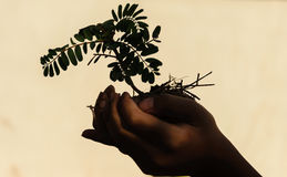 Hand holding little tree. Two hand holding little tree,concept develop green earth, concept shawdow image Royalty Free Stock Photos