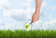 Hand holding magnifying glass and using it to enlarge seedling Stock Photo
