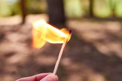 Hand holding a match on fire in the forest. Hand holding a match on fire in a pine forest stock photos