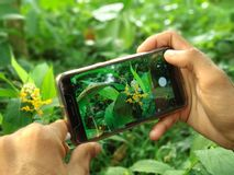 Hand holding Mobile phone click photo flowers in the garden stock photo