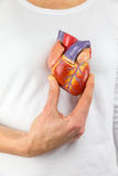 Hand holding model heart on chest. Female hand showing artificial heart model in front of human body Royalty Free Stock Photo