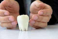 Hand holding molar Stock Images