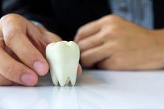 Hand holding molar Stock Image