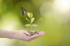 Hand holding money coin against tree with butterfly. Stock Photos