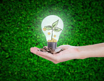 Hand holding money coin lightbulb against tree on green nature. Royalty Free Stock Image