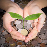 Hand holding money and money tree for money growing concept Royalty Free Stock Photo