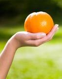 Hand holding orange Stock Images