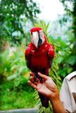 Hand holding Parrot. Zoo keeper holding the parrot stock images