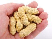 Hand holding peanuts stock photos