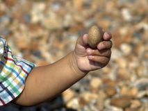 Hand holding pebble. Baby's hand holding pebble Royalty Free Stock Photo