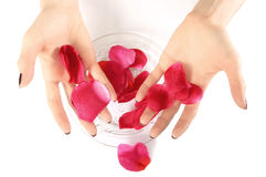 Hand holding petals for spa Royalty Free Stock Photography