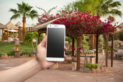 Hand holding the phone against the backdrop of the arbor Royalty Free Stock Photography