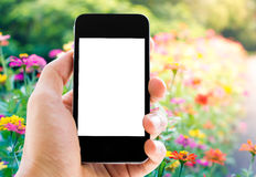 Hand holding phone on flower background Royalty Free Stock Photography